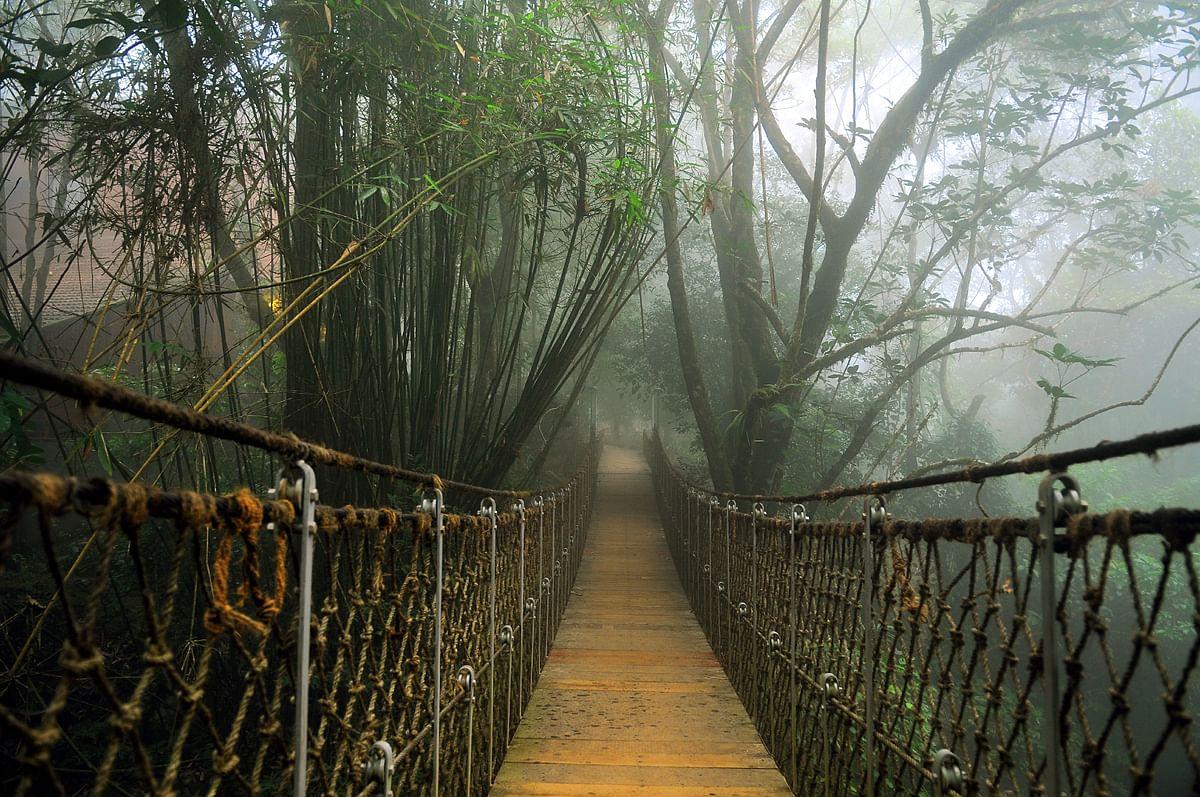hanging-bridge-at-vythiri-resort
