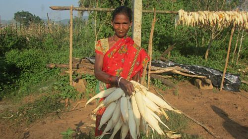 Most women like Majia Kumuruka have taken to cultivating nutrition gardens in their backyard. (Credit: Rakhi Ghosh\WFS)