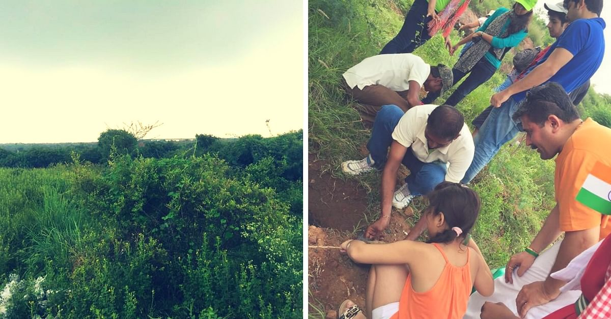 Thanks to This NGO, There's Now a Forest in the Middle of the Concrete City of Gurgaon