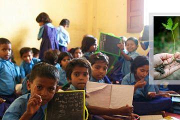 school-education-sapling