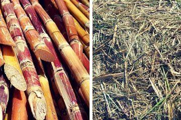 sugarcane-fb