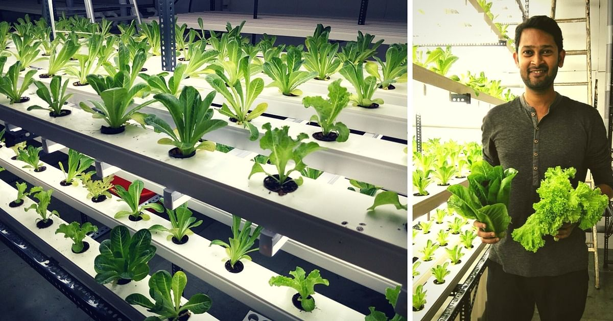 This Software Engineer Sold His Company to Start a Vertical Hydroponic Farm in Goa