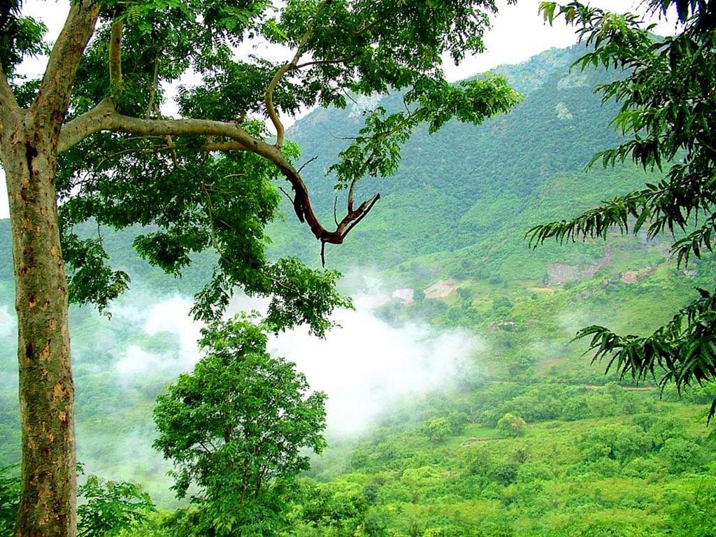 araku-valley-2484