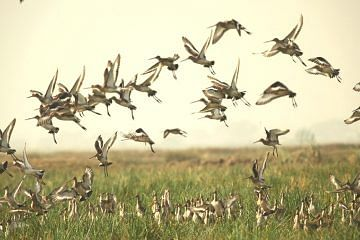 birds_f