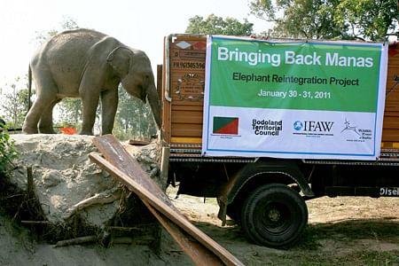 elephant-relocation-feb2011-6