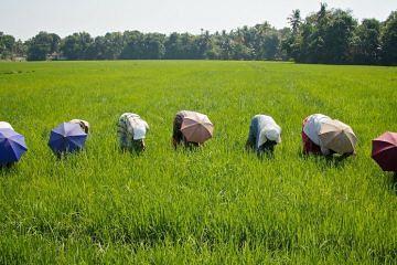 farm-india