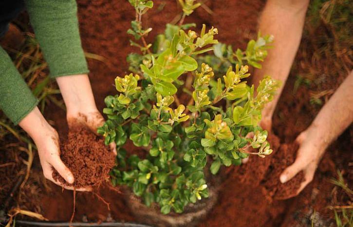 plant_1461477688