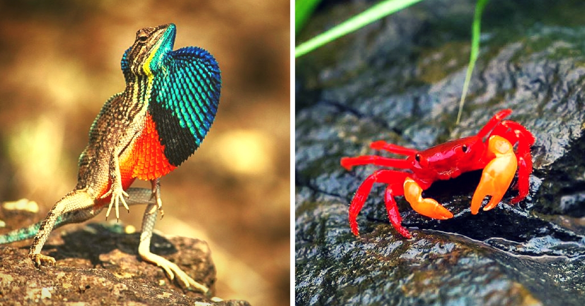 From a 'Sorting Hat' Spider to a Bird That 'Sings Like Adele': 8 New Species Discovered in India in 2016