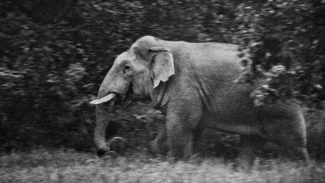 _91308052_elephantsintheroom_subratabiswas_02