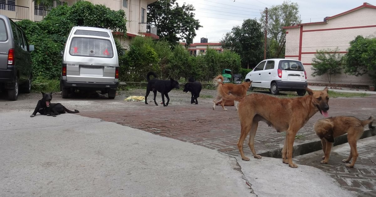 Hyderabad Animal Lovers, a New ID Card Makes Caring for Your Stray Four-Legged Pals Simpler