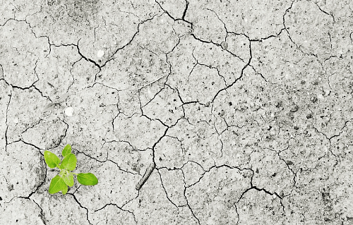 Obstacles for an organic future