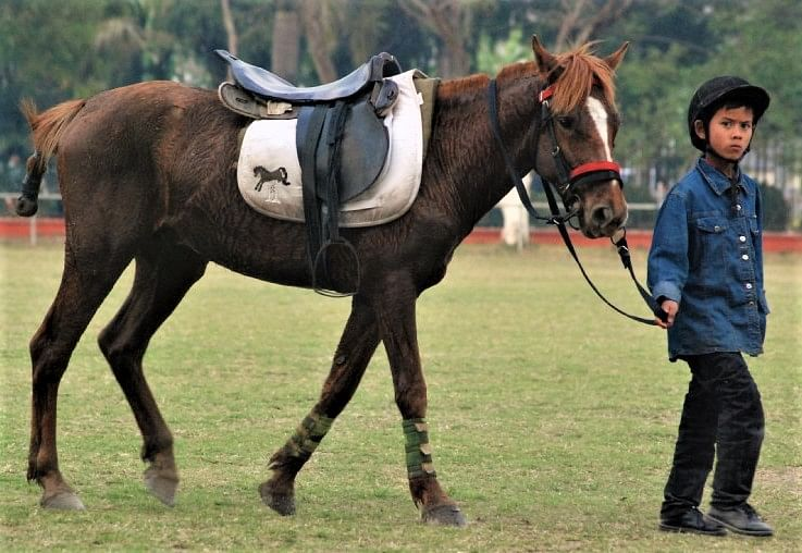 Manipur's Ponies Are on the Brink of Extinction. And This Sporting Event Could Save Them!