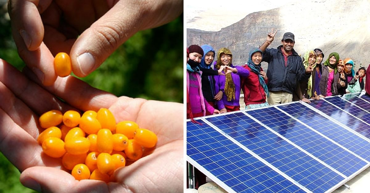 How a 'Wonder Berry' Is Bringing an Economic Transformation in the Cold Deserts of Lahaul-Spiti