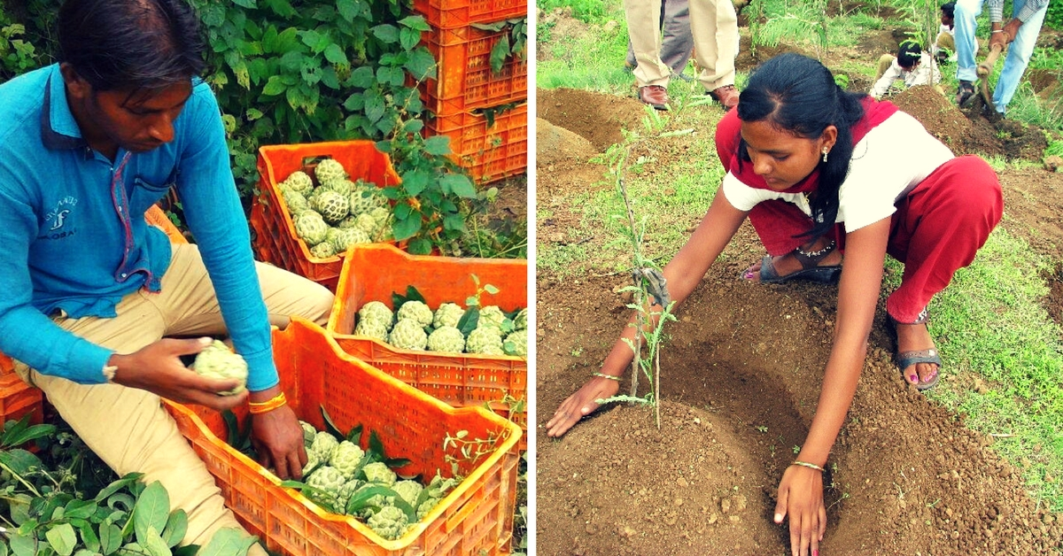 From Growing Its Own Forest to Selling Organic Fruits, This Village Funds Its Own Development