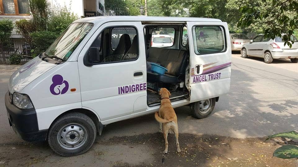 indigree5