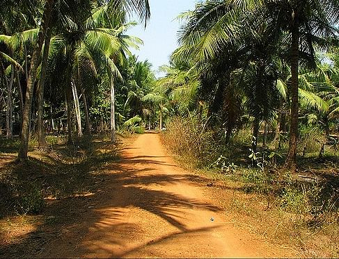 kerala road cropped