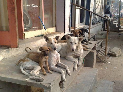 stray-dogs-resized
