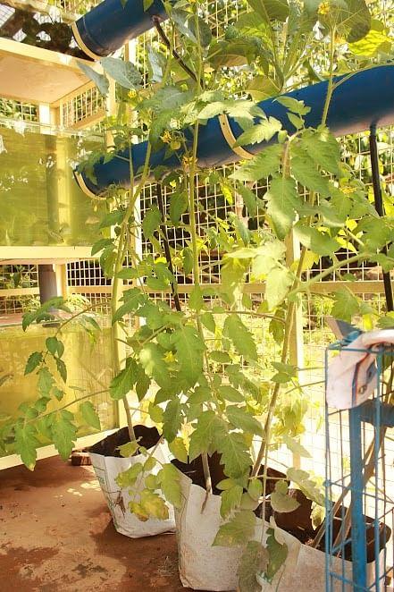 vegetables in grow bags