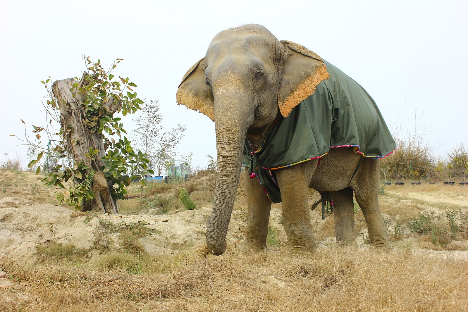 Asha wearing her fleece jumbo jacket