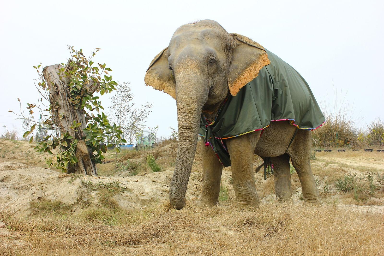 Asha wearing her fleece jumbo jacket