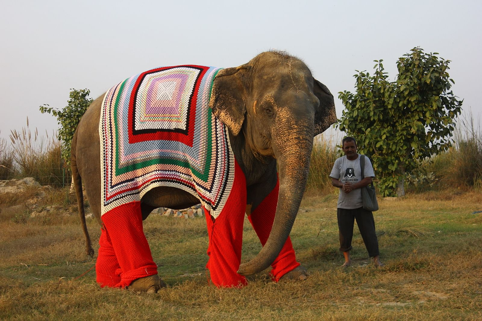 Rescued elephant Bijli out on a walk with her keeper at the Wildlife SOS Elephant Conservation & Care Center, Mathura