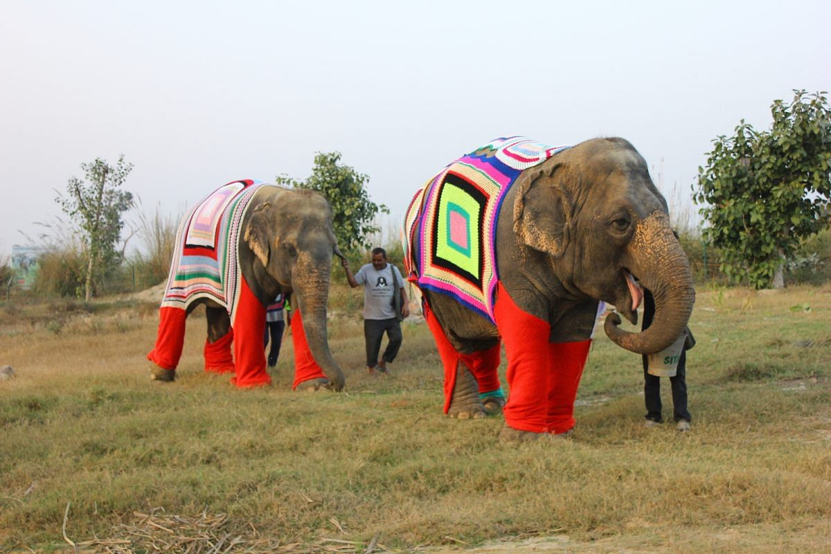 TBI Blogs: How Do Rescued Elephants Fight the Bitter Chill of Winter? With Jumbo Jackets, of Course!
