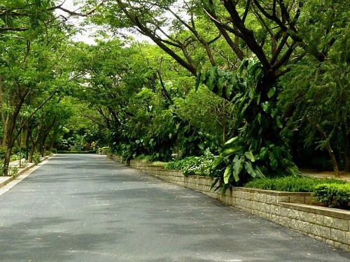 bangalore trees resized