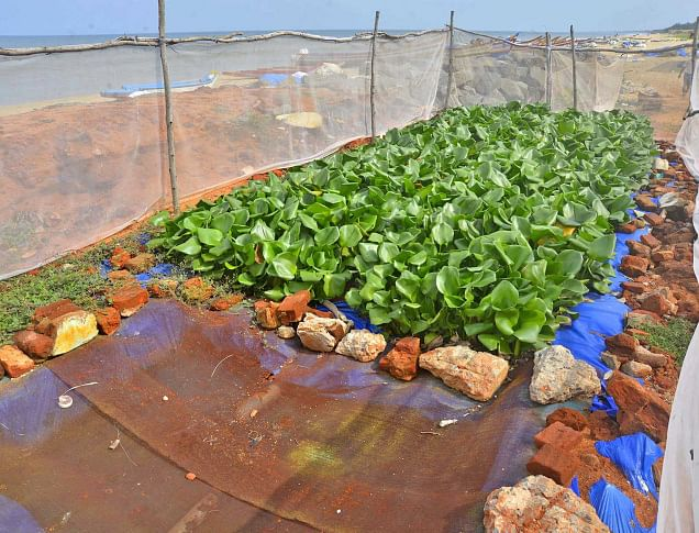 This Low-Cost Technology Is Helping a Puducherry Village Treat Its Wastewater, and It Uses Plants!