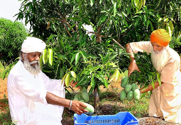 How a Bunch of Farmers from Punjab Transformed a Drought-Prone Village in Tamil Nadu