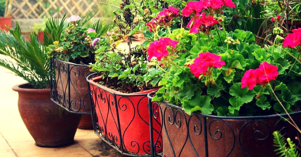 On Window Sills & Terraces: Bangaloreans Are Setting up Gardens Everywhere, and Loving It!
