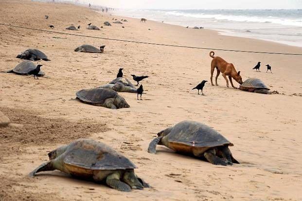 Marine Life affected