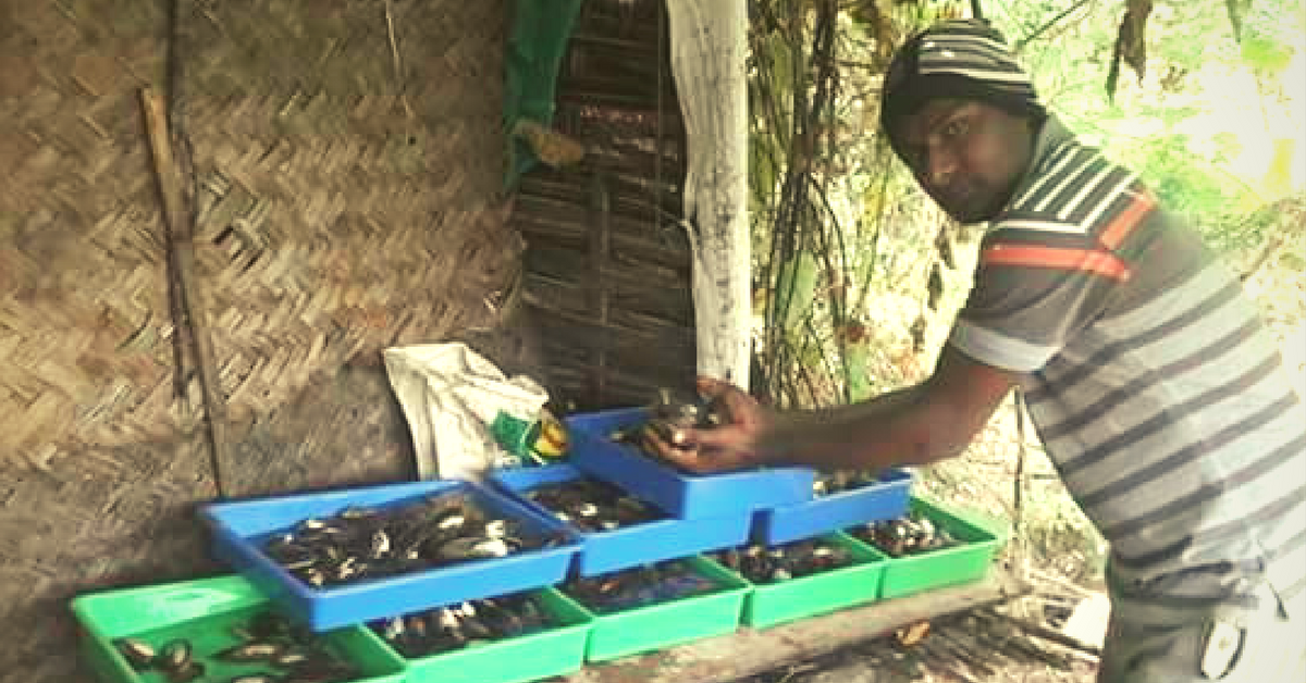Pearl Farming : Tips From A Successful Pearl Farmer From