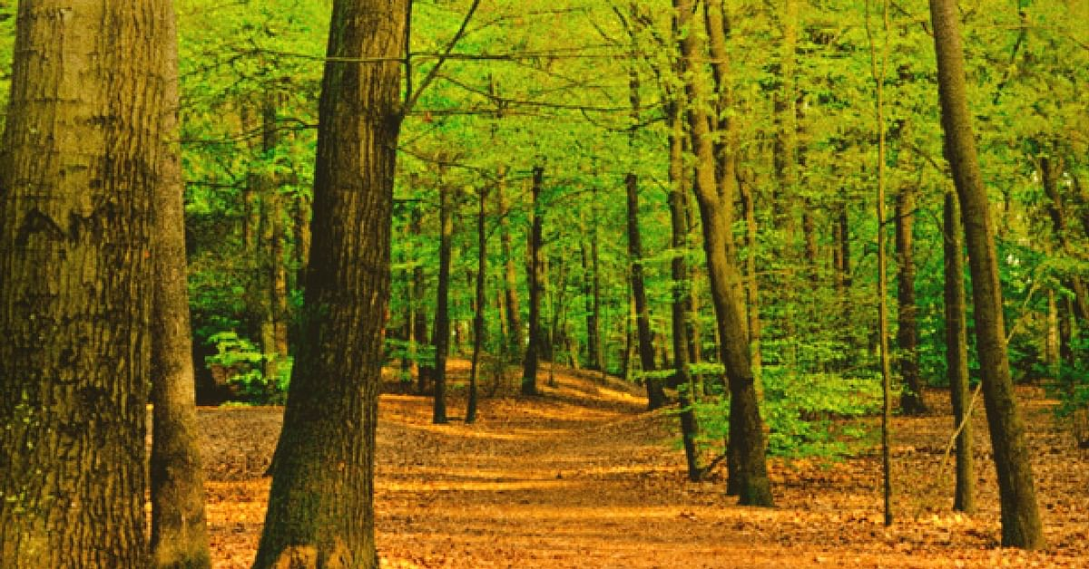 How 19 Hectares of Land Near Mumbai Is Going to Be Turned Into a Forest