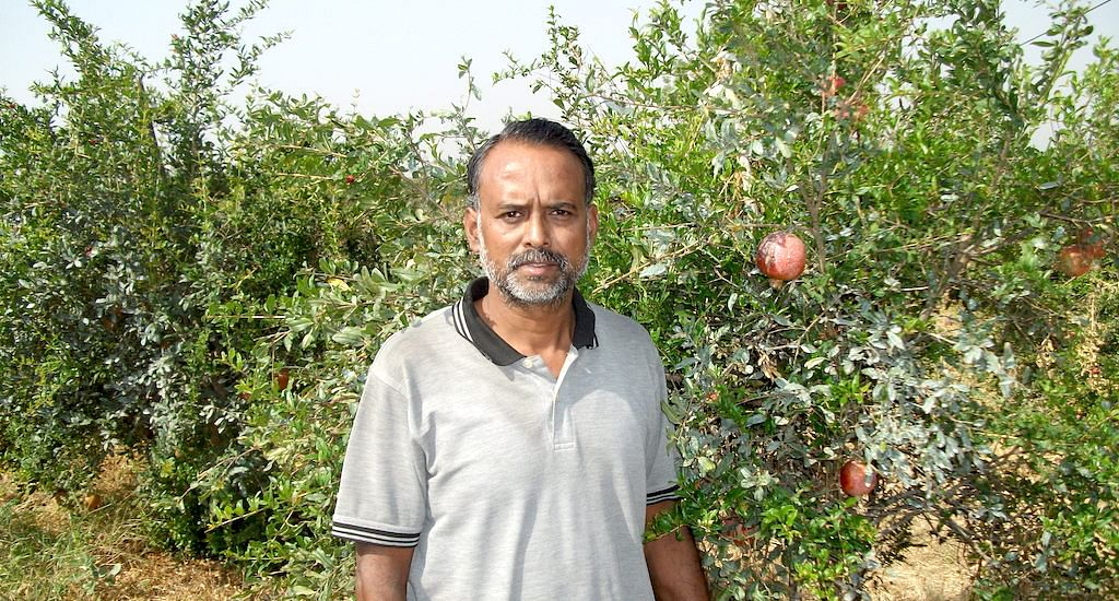 Vishwajit Akre of Ranwadi village at his pomegranate farm near Wardha. (Photo by Hiren Kumar Bose)