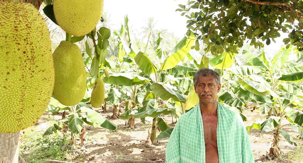 Farmer Jesuraj of Pudukottai in his farm where he practises agroforestry. (Photo by R. Samuel)