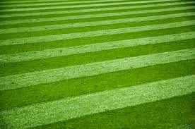Artificial Grass in Delhi