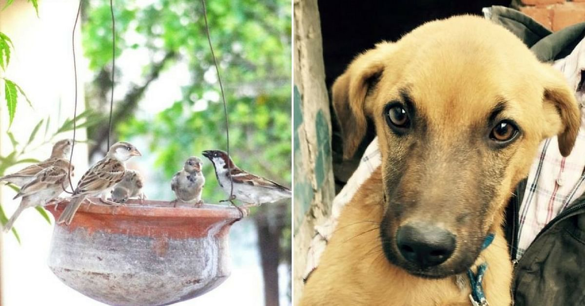 Want to Help Protect Distressed Animals & Birds in Your City? Reach out to These Organisations
