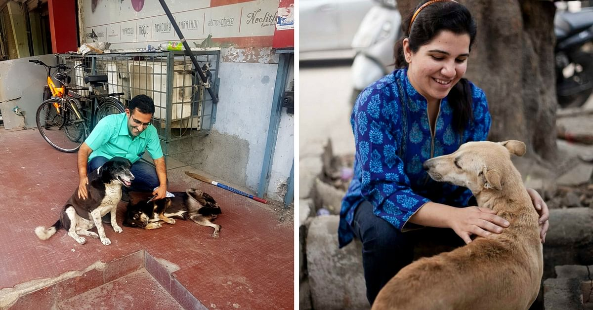 A Family's Commitment Has Helped Give Onsite Treatment to Over 2,000 Street Dogs in Delhi