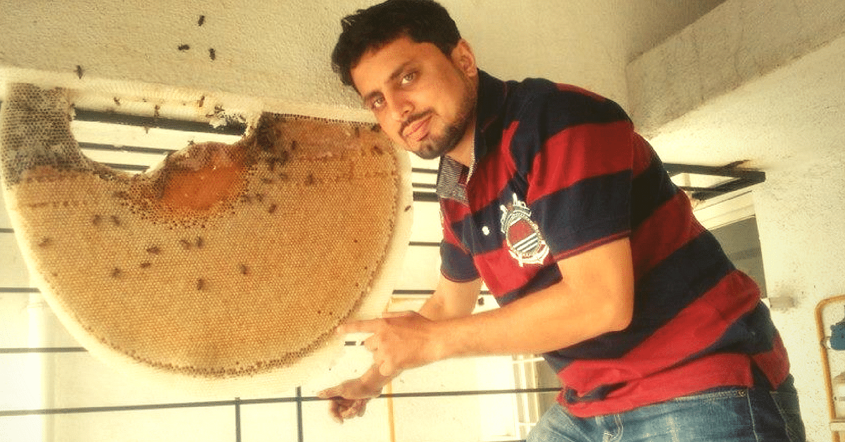 This Software-Engineer-Turned-Bee-Keeper Has Saved 130 Beehives by Relocating Them