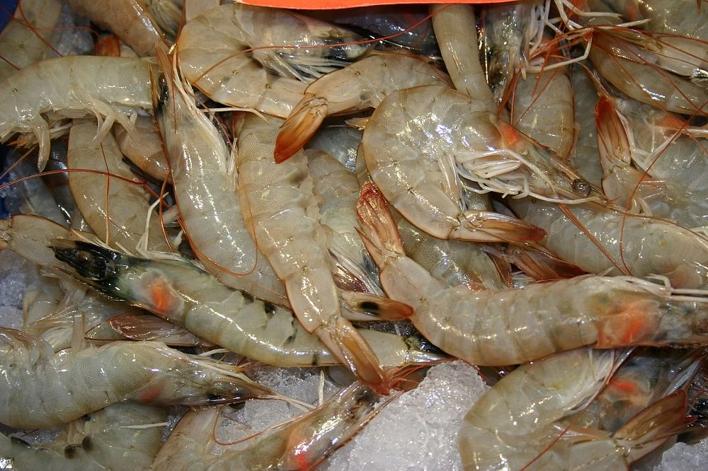 Chennai Scientists Are Trying to Revive the Country's Shrimp