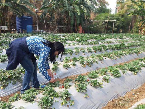 Date Farming Changed Nagpur Farmer, Savi Thangavel's Life ...