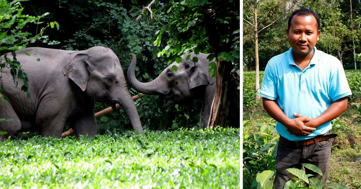 This Assamese Man's Tea Estates Are the World's First Elephant-Friendly Ones