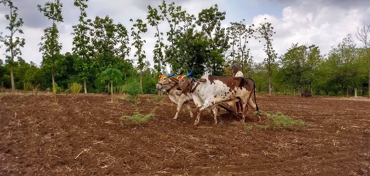Ploughing the traditional way