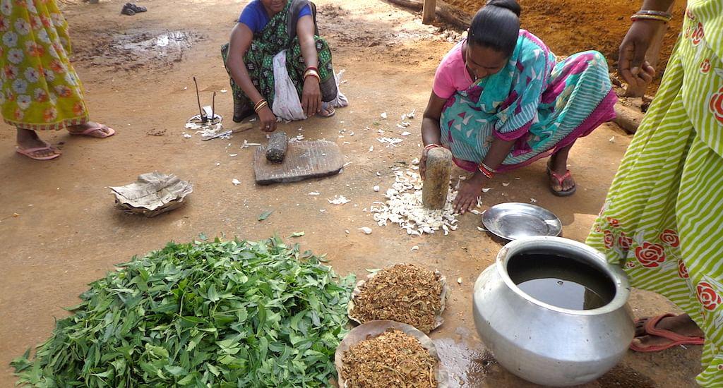 Farmers busy preparing organic pesticides for their fields. (Photo by Basudev Mahapatra)