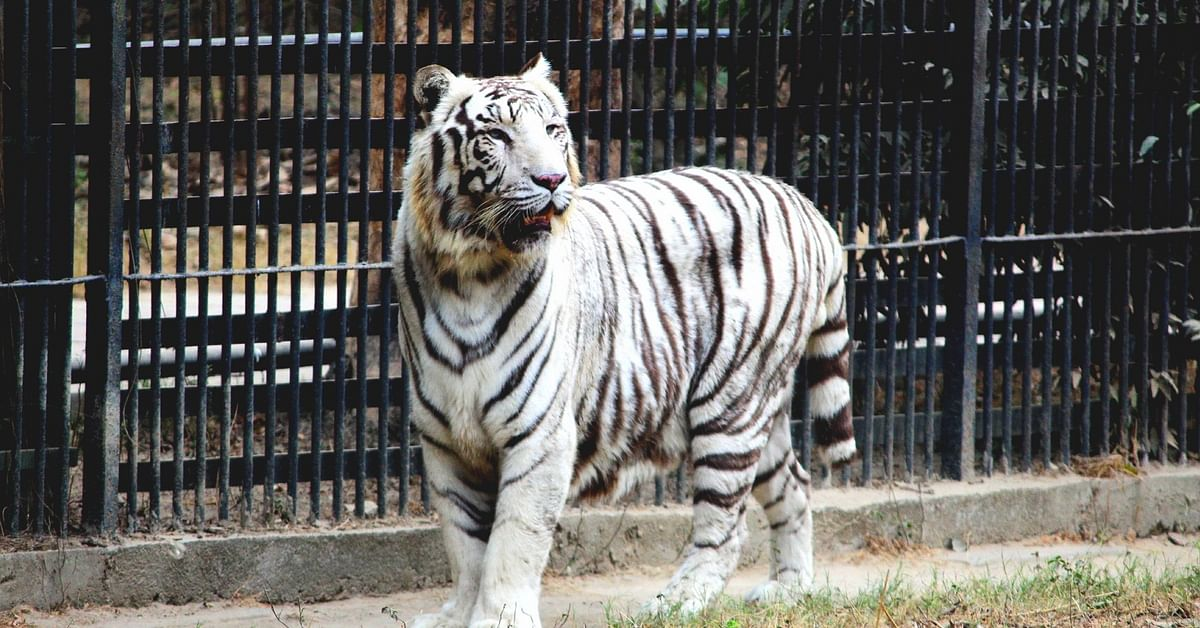 Want to Adopt Wild Animals Like Tigers & Elephants? Delhi Zoo Might Soon Let You!