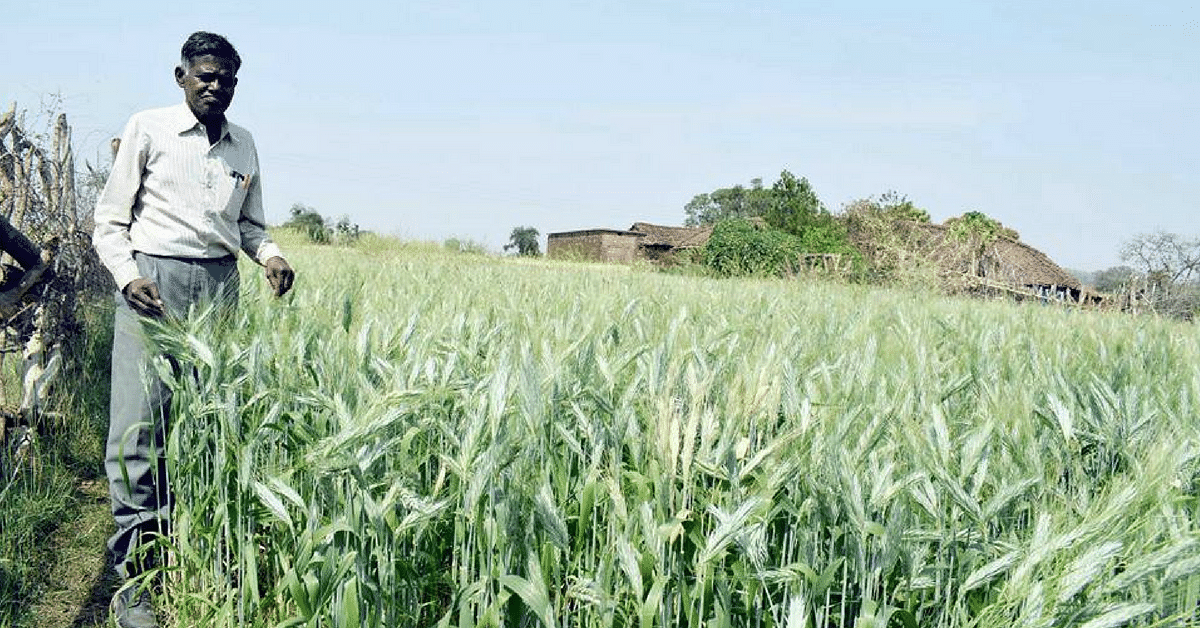 How a Farmer From Madhya Pradesh Is Growing 110 Varieties of Rice in Just 2 Acres of Land