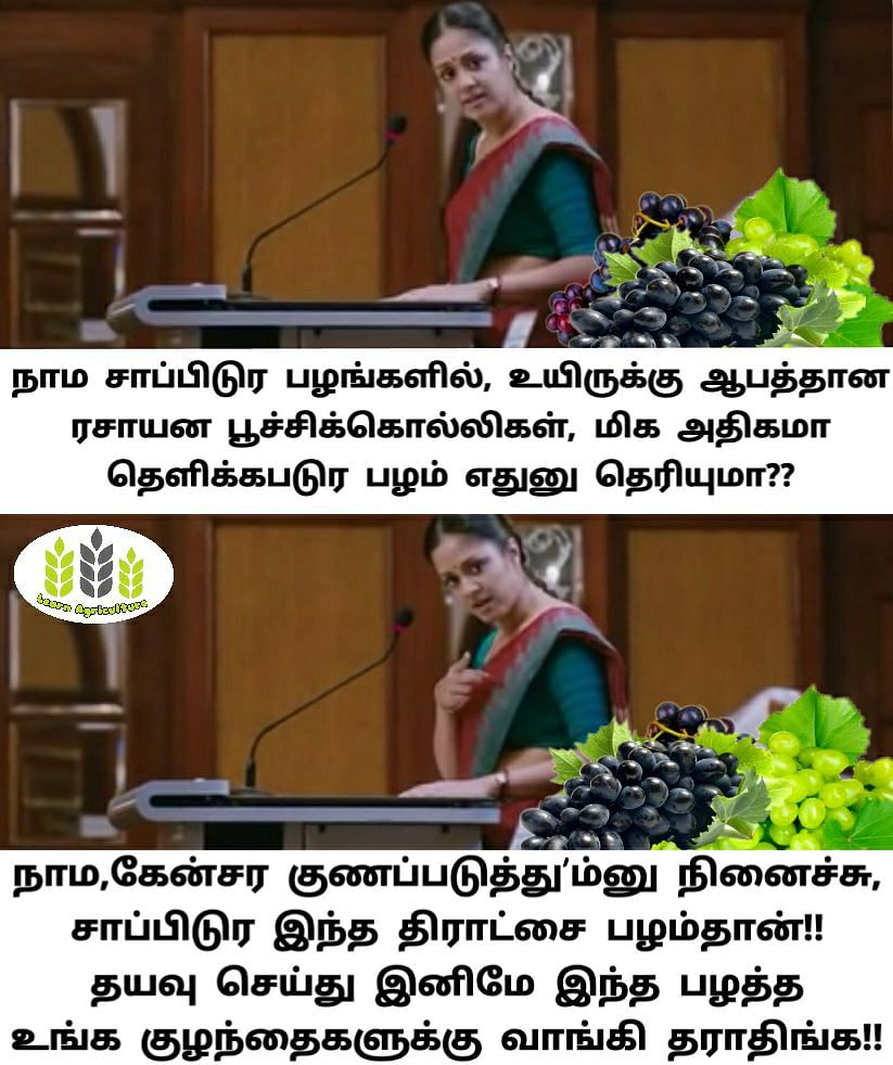 A meme featuring a popular tamil actor about how pesticide usage is rampant while cultivating grapes photo source learn agriculture
