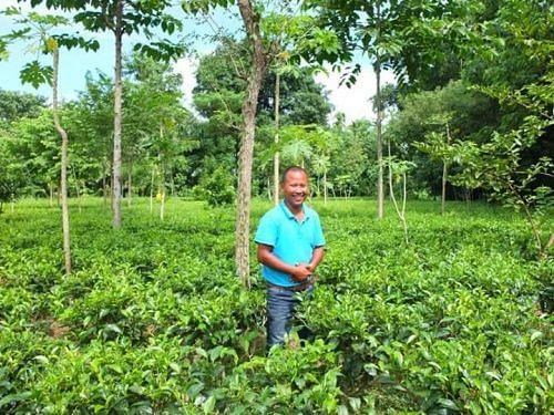 Meet Tenzing Bodosa, Assam's First Organic Tea Farmer Who
