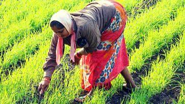 Kanakapura Women Farmers Indigenous Seeds Online