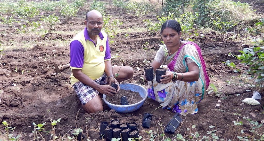 Sangita Mhatre and her husband Shashikant in their jasmine nursery, preparing saplings to be sold to other farmers. (Photo by BAIF)